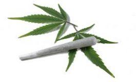 Ponovno uhvačen uzgajivać marihuane u Sarvašu