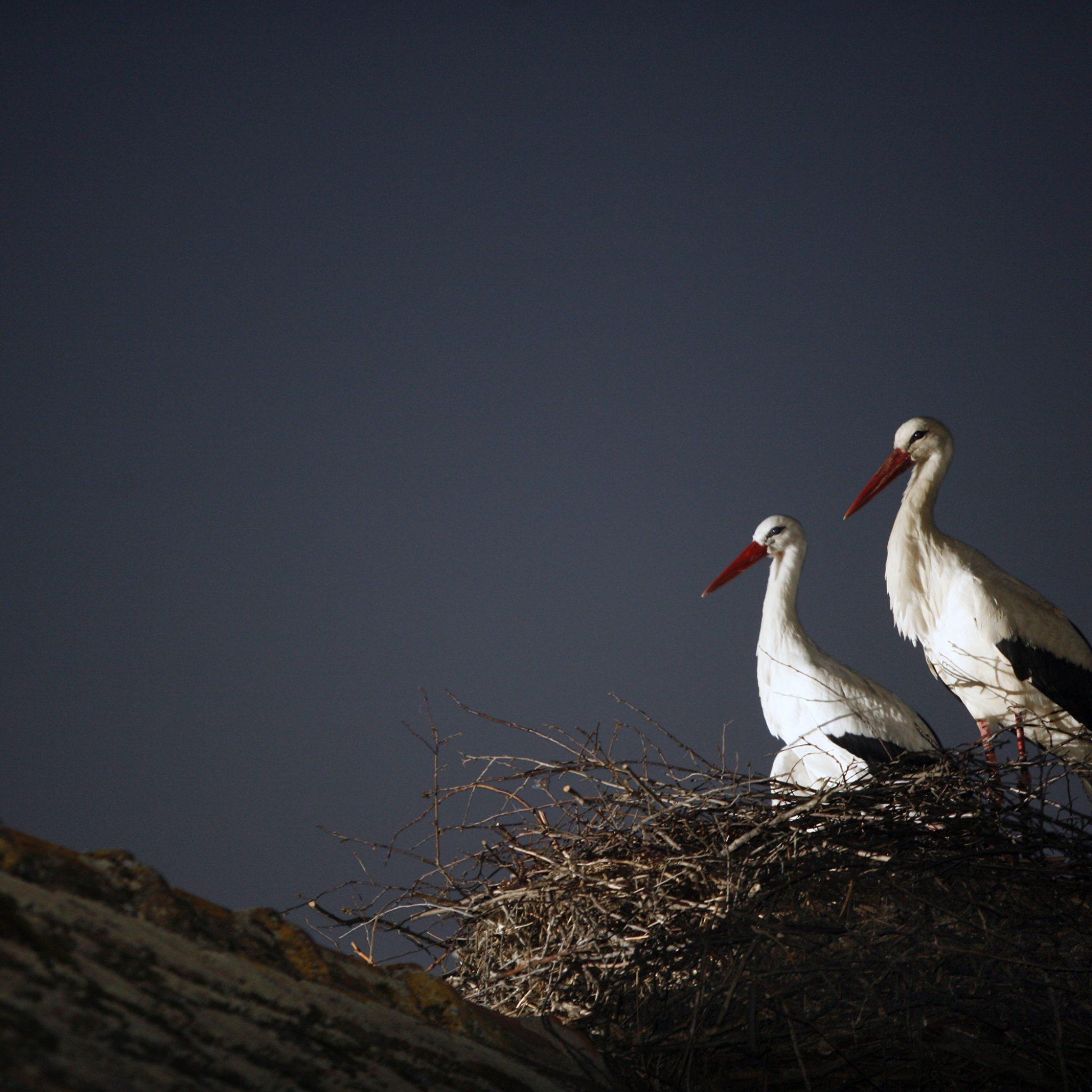 Photo of Klepetan i Malena – priča o ljubavi – UŽIVO